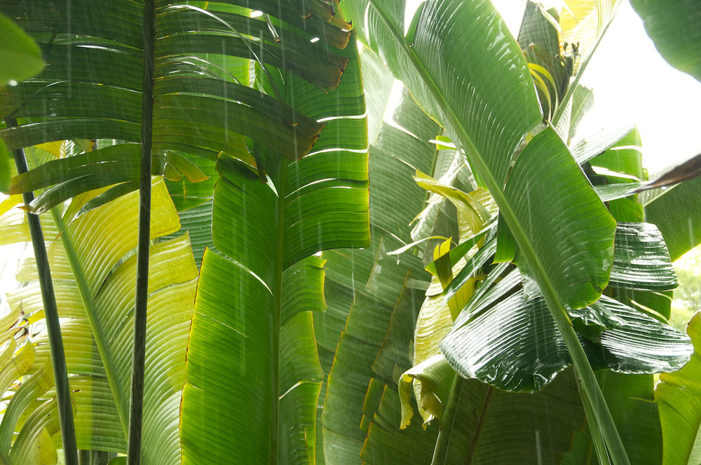 vert green forest foret tropical nature rain pluie water eau.jpg