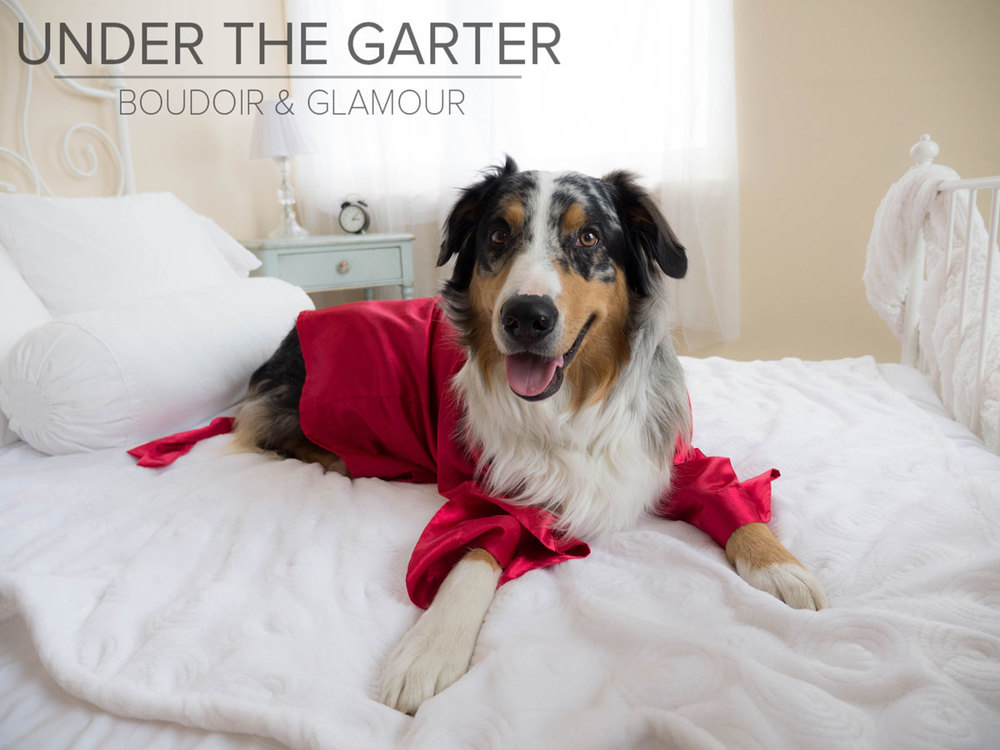 boudoir-photography-denver-dogdoir-australian-shepherd.10.jpg