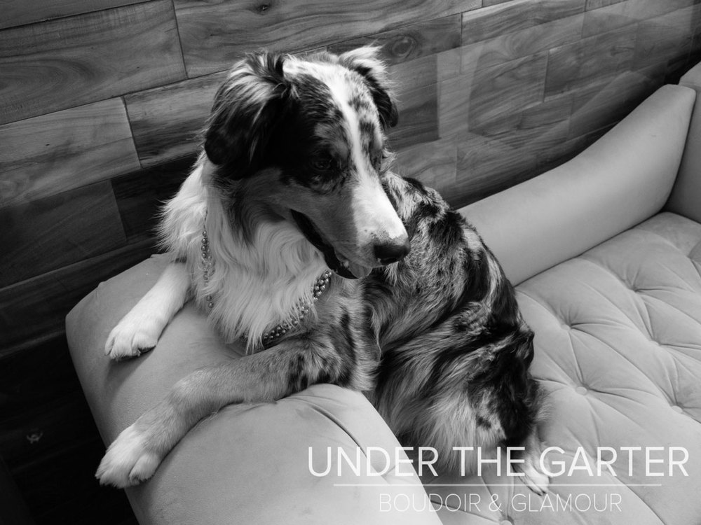 boudoir photography denver dogdoir australian shepherd 4.jpg