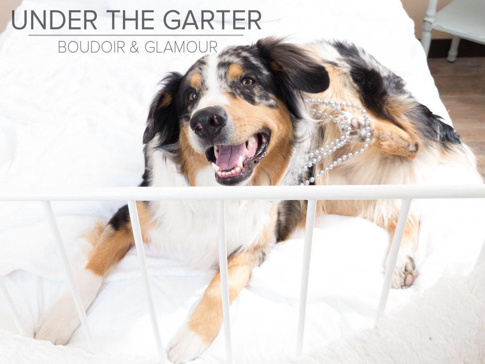 boudoir photography denver dogdoir australian shepherd 7.jpg
