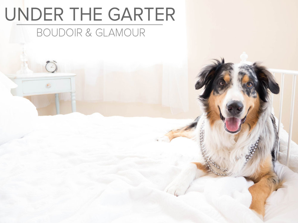 boudoir photography denver dogdoir australian shepherd 8.jpg