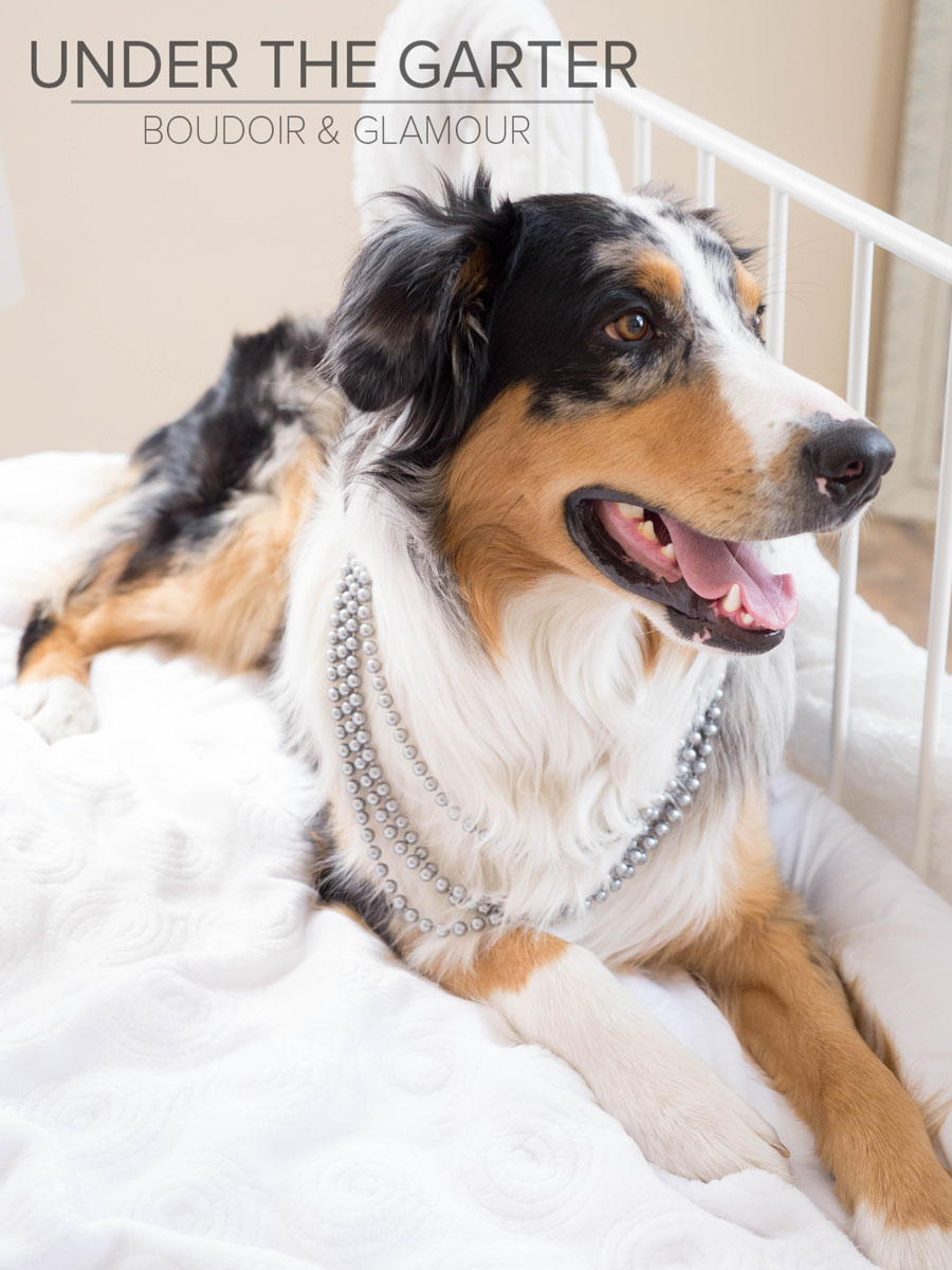 boudoir photography denver dogdoir australian shepherd 9.jpg