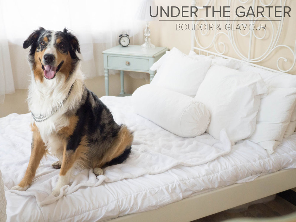 boudoir photography denver dogdoir australian shepherd 11.jpg