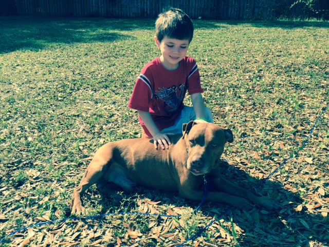 We are loving life with Logan. He is such a sweetie and will do anything for belly rubs! He loves the outdoors and we love taking him on long walks. -Logan's Family Logan was adopted in Feb. 2015. He was heartworm positive when he was adopted, and FOJA has assisted with the cost of  his treatment.