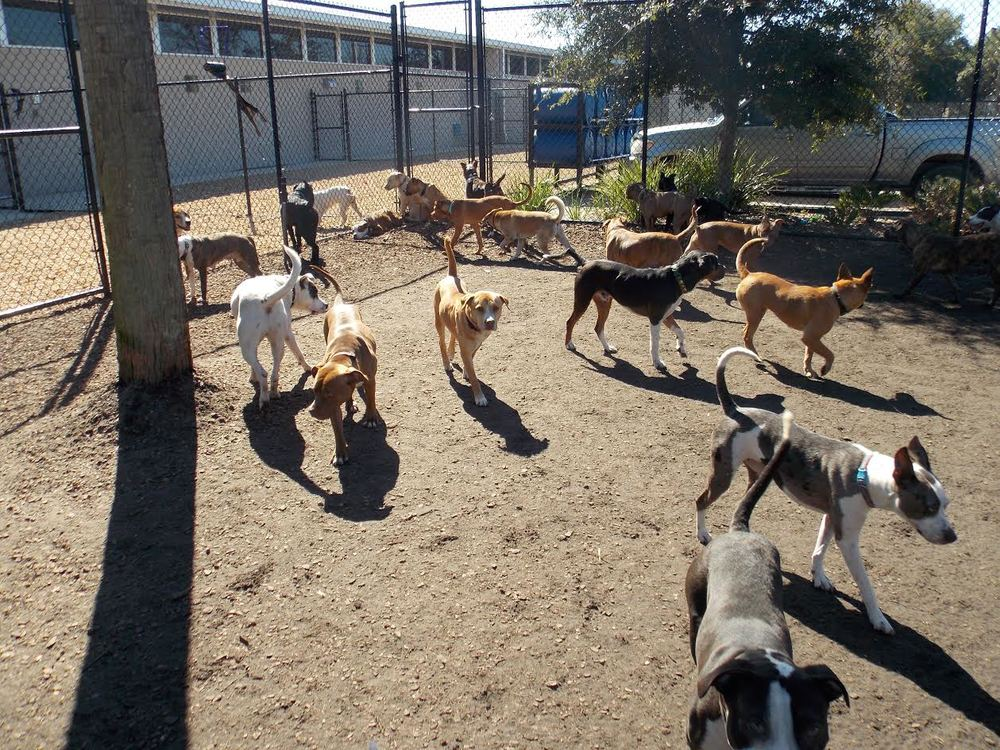 Dogs enjoying one of the exercise yards provided by FOJA!