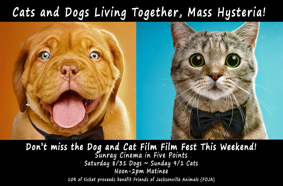 The NY Cat & Dog Film Fest Comes to Jacksonville This