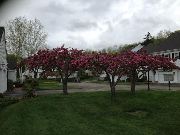 small fruit trees.jpg