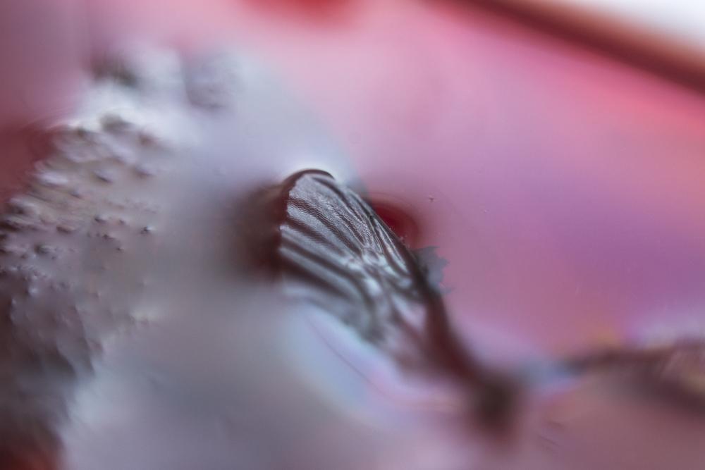 wingd.jpg
