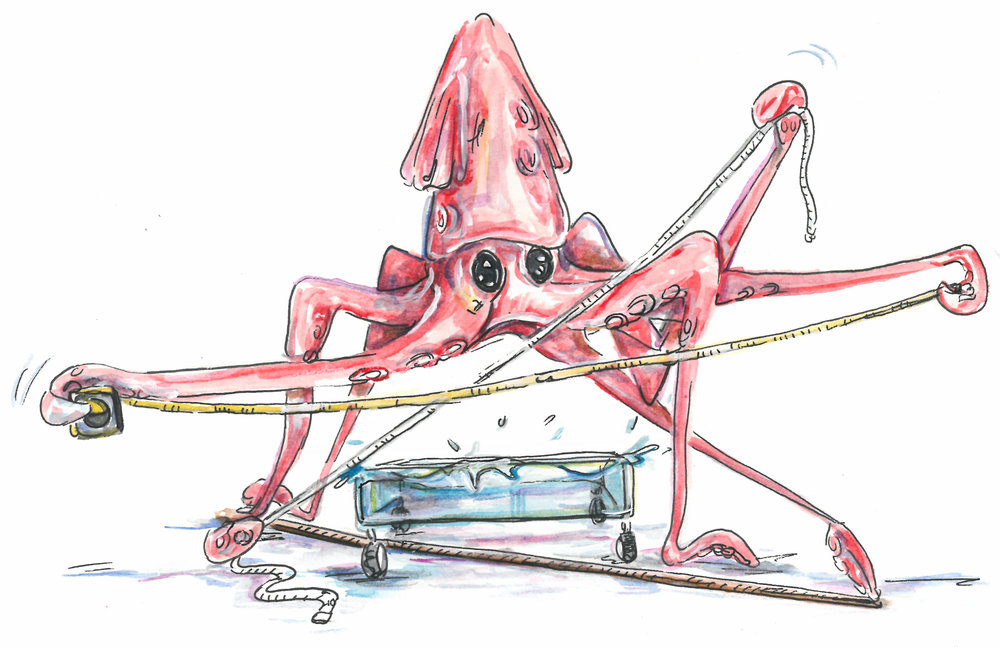 cherry squid 2.jpg