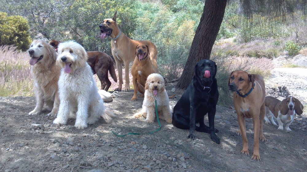 Jackson and his hiking crew