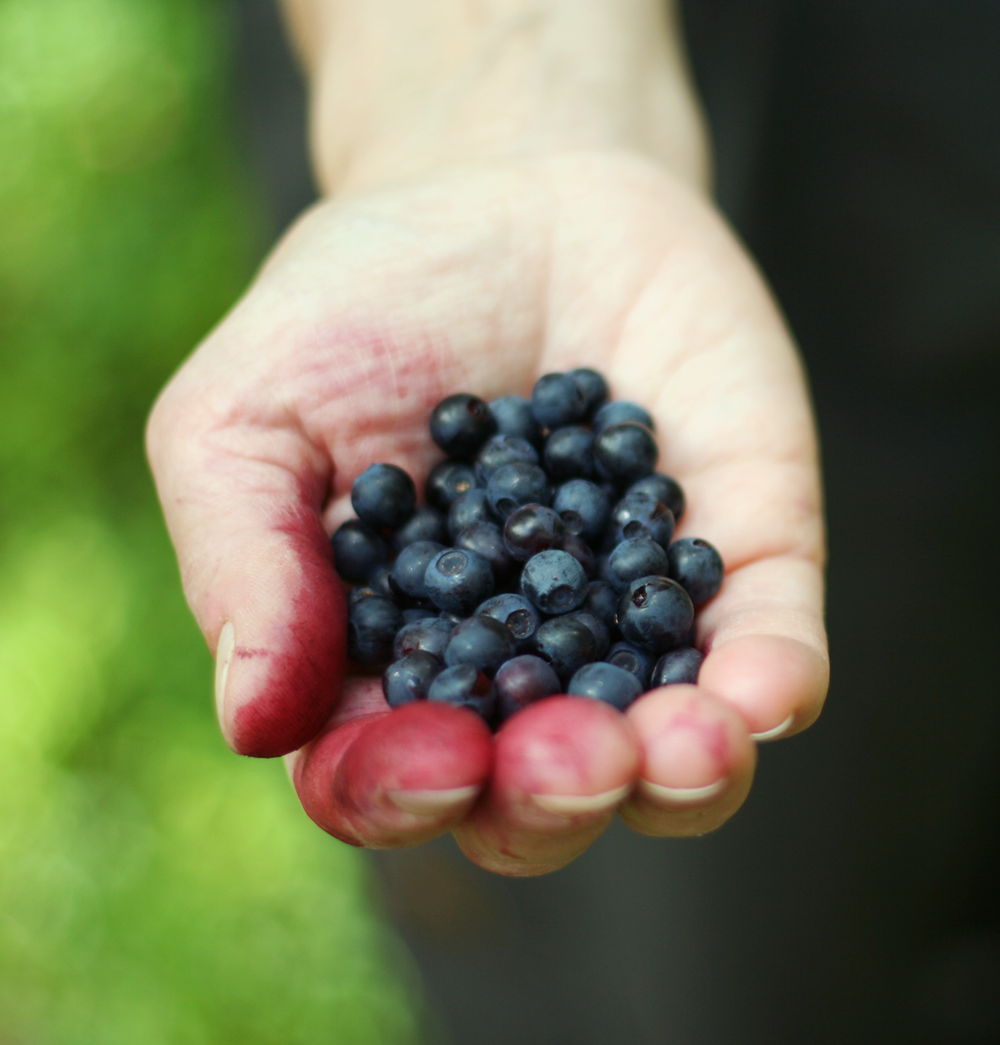 morningprojectsblueberries.png