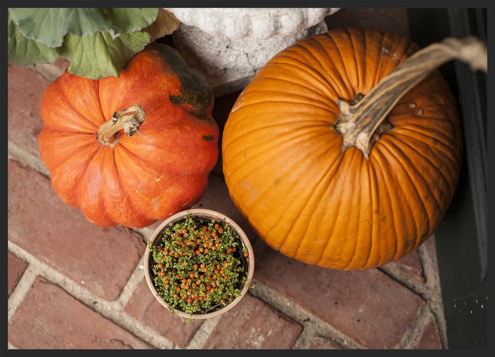 Halloween!  Linda Kay McCloy - alittleenglishinteriors.com