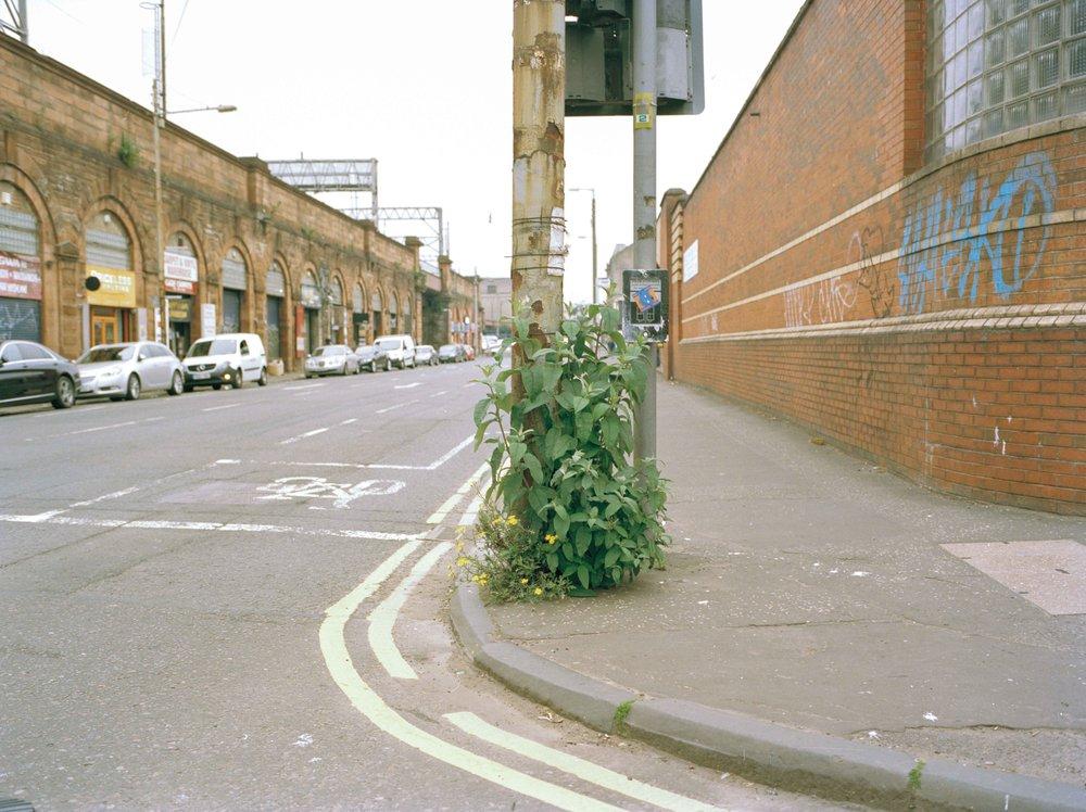 Butterfly-bushes-sam-moeller-2.jpg