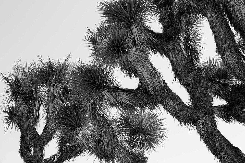 sam-moeller-desert-world-3.jpg