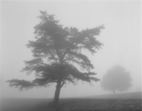 2 Trees And Fog Blue Ridge Parkway