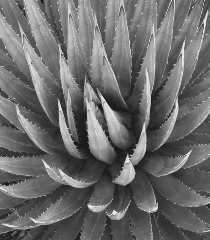 Plant AZ