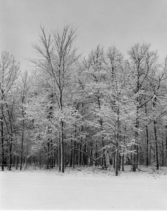 Snow Storm Reedsville