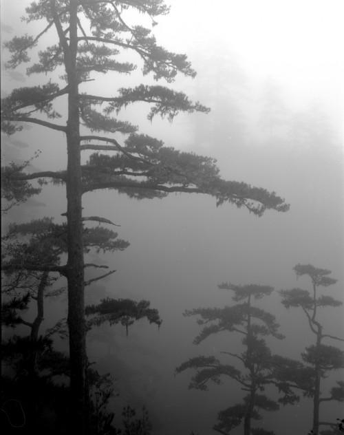 Trees Taiwan