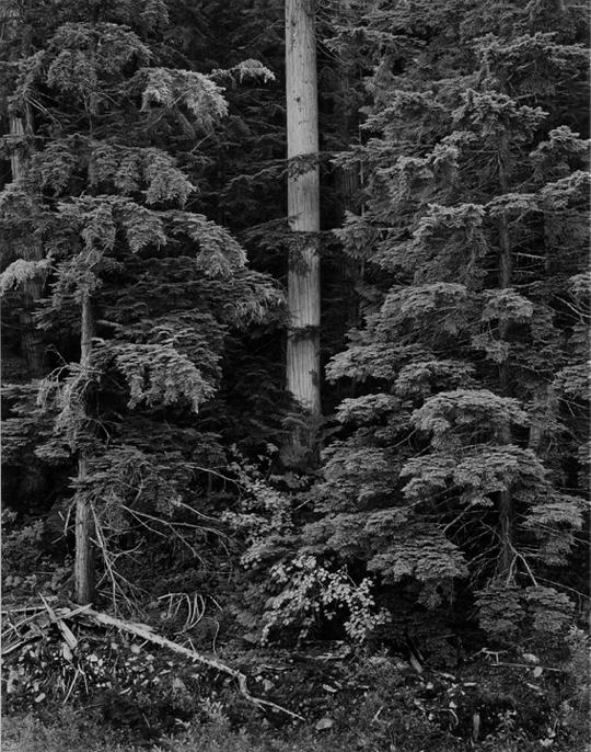 Trees Canada