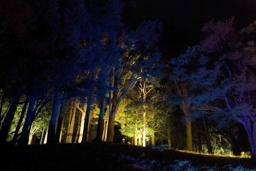 Landscape Lighting design_Insight Light_NZ forest (2).jpg