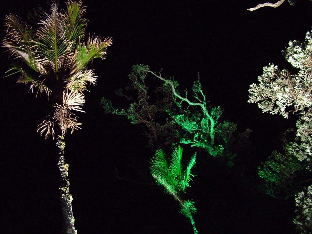 Landscape Lighting design_Insight Light_NZ Nikau Palms.jpg
