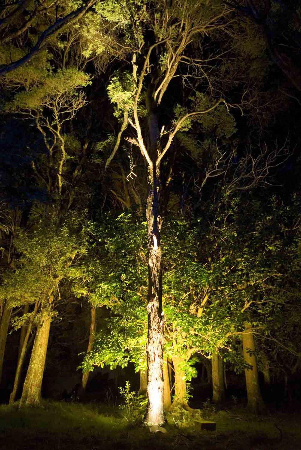 Landscape Lighting design_Insight Light_NZ Totara (2).jpg
