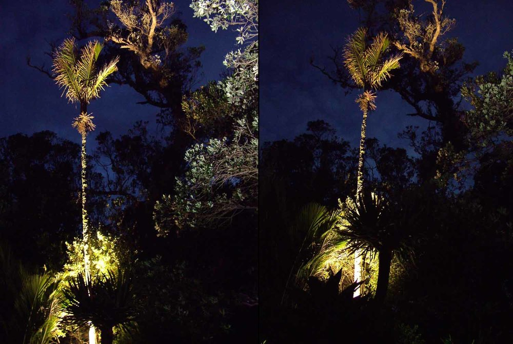 Landscape Lighting design_Insight Light_NZ #7 Nikau.jpg