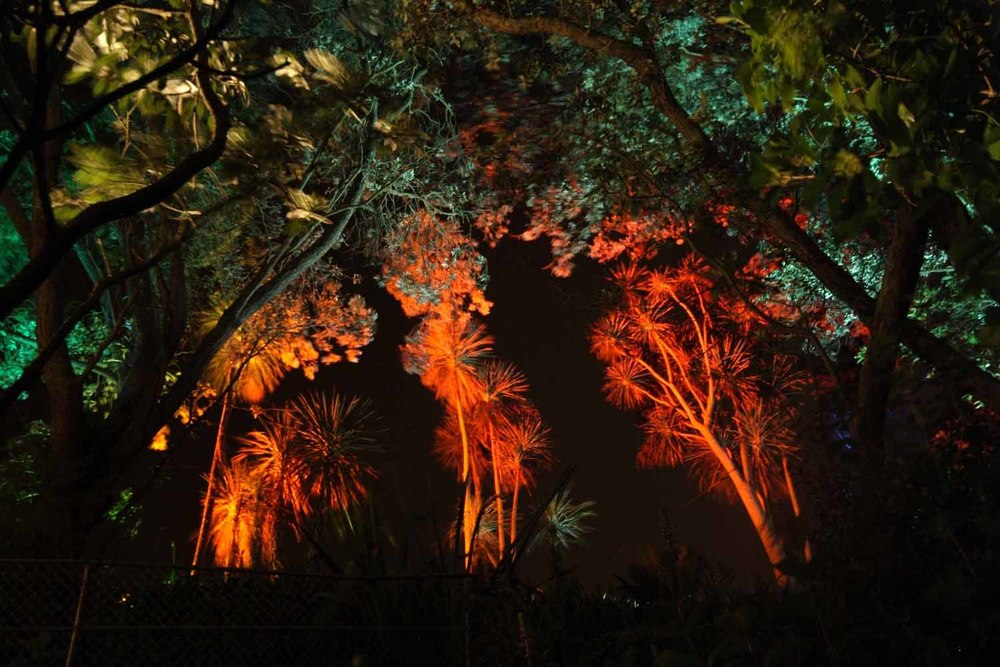 Landscape Lighting design_Insight Light_NZ Cabbage trees (2).jpg