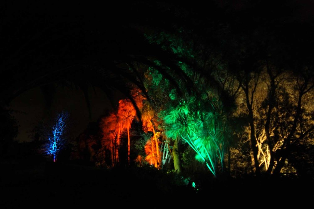Landscape Lighting design_Insight Light_NZ cabbage trees.jpg