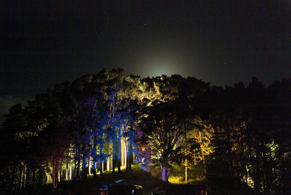 Landscape Lighting design_Insight Light_NZ Forest.jpg