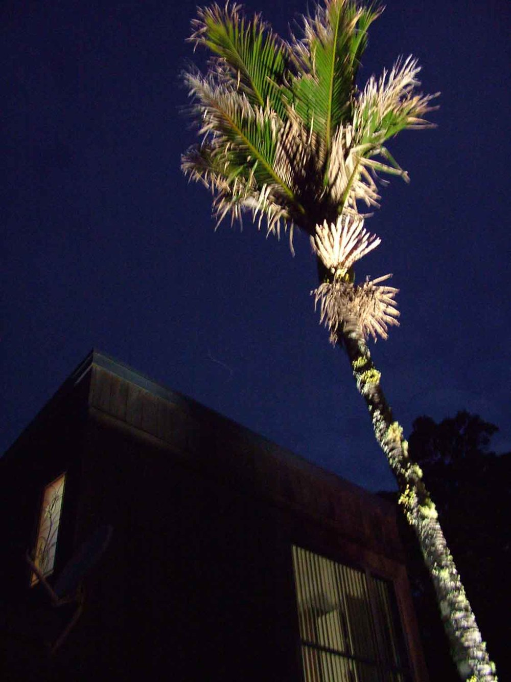 Landscape Lighting design_Insight Light_NZ nikau.jpg