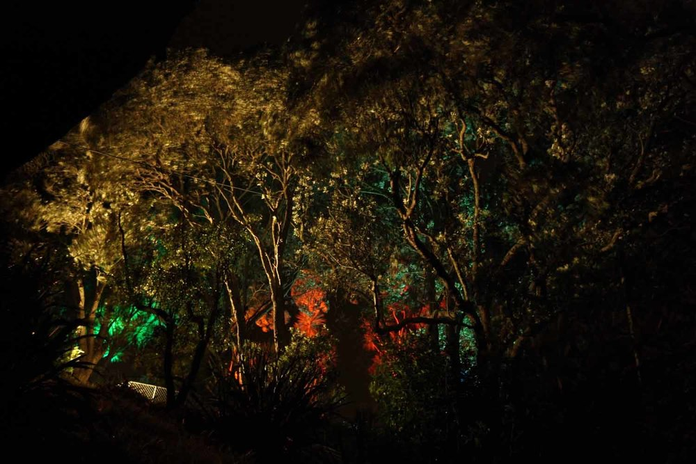 Landscape Lighting design_Insight Light_NZ Pohutakawa.jpg
