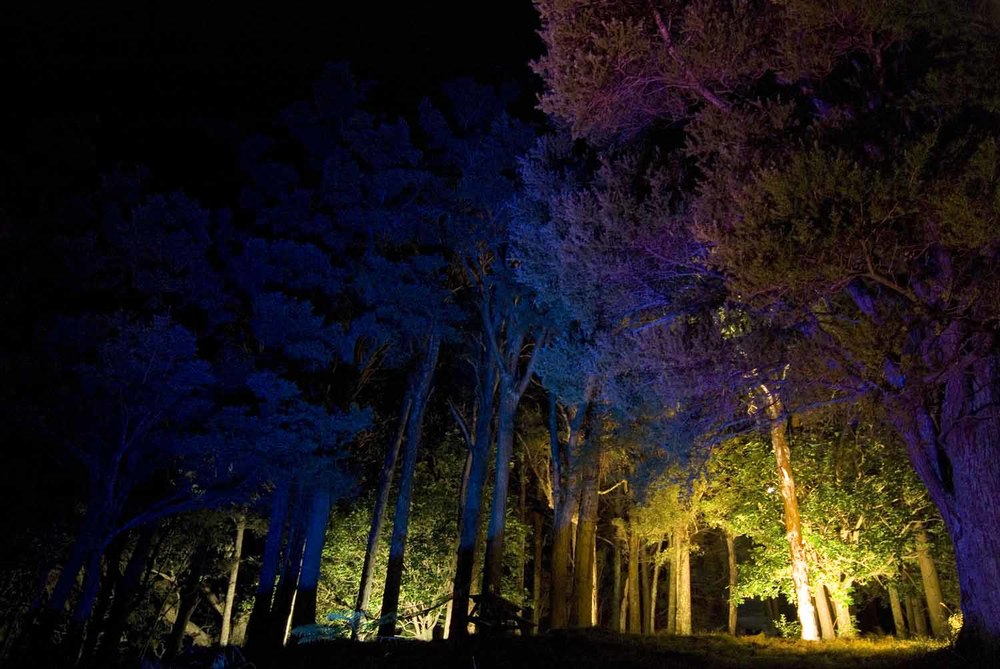 Landscape Lighting design_Insight Light_NZ totara (3).jpg