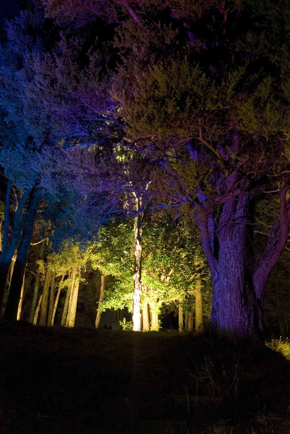 Landscape Lighting design_Insight Light_NZ Totara.jpg