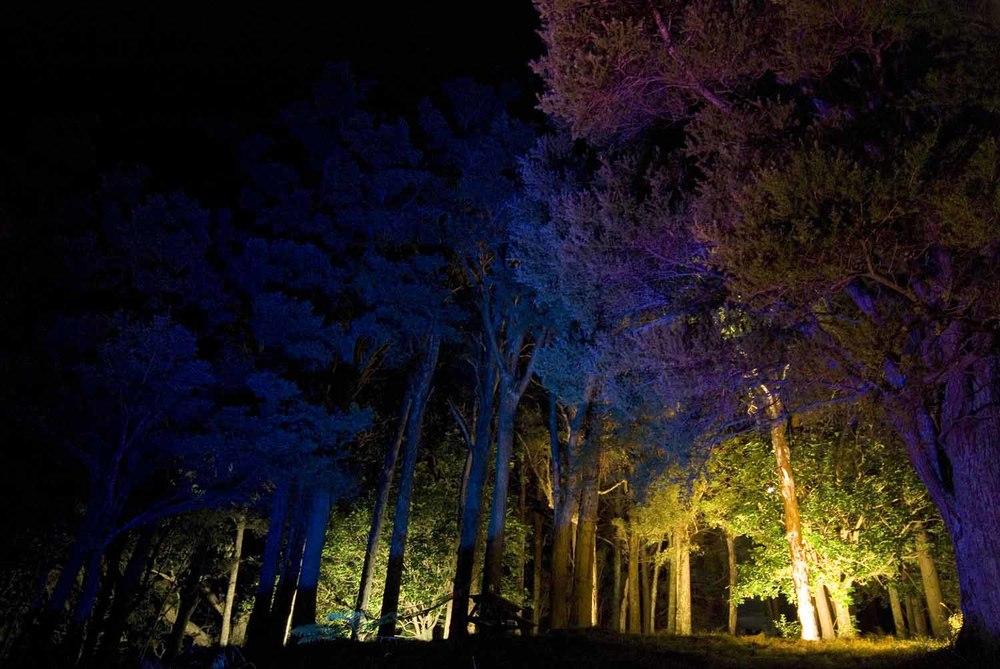 Landscape and Garden Lighting