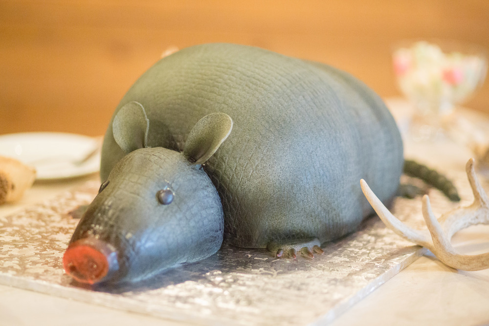 Armadillo Groom's cake Sugar Bee Sweets