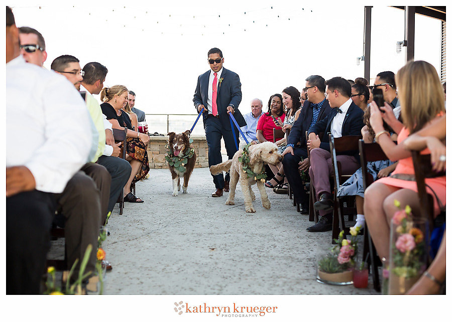 Groom walking dogs down aisle