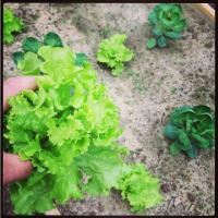 plants-squarespace.jpg