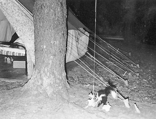 Skunk in camp II.jpg