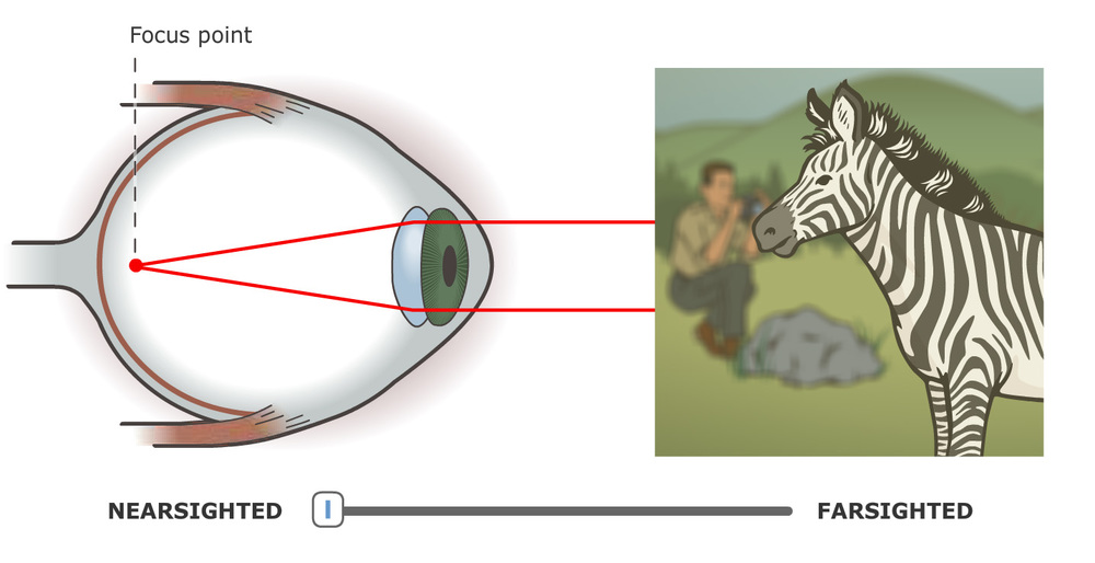 Nearsighted/Farsighted diagram