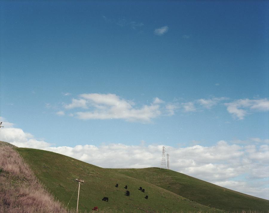 cowfields.jpg