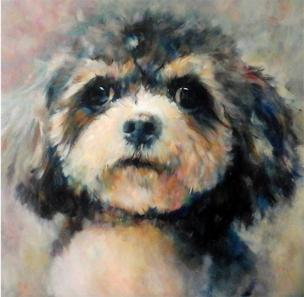 tilly cavachon oil portrait sue gardner.png
