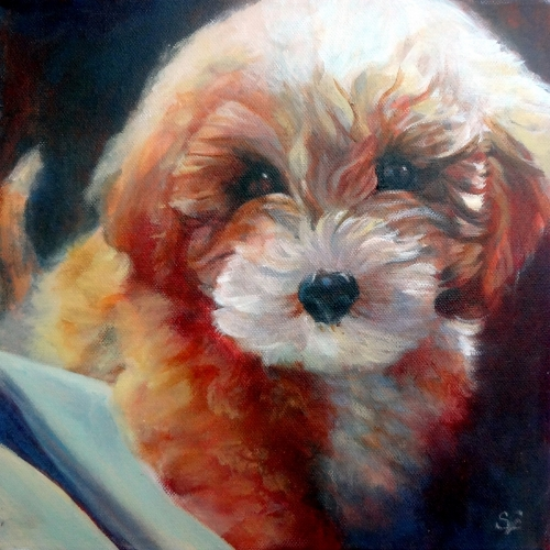 flynn mini poodle puppy portrait sue gardner.jpg