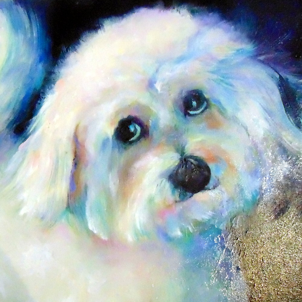 bichon maltese dog oil portrait painting sue gardner.jpg