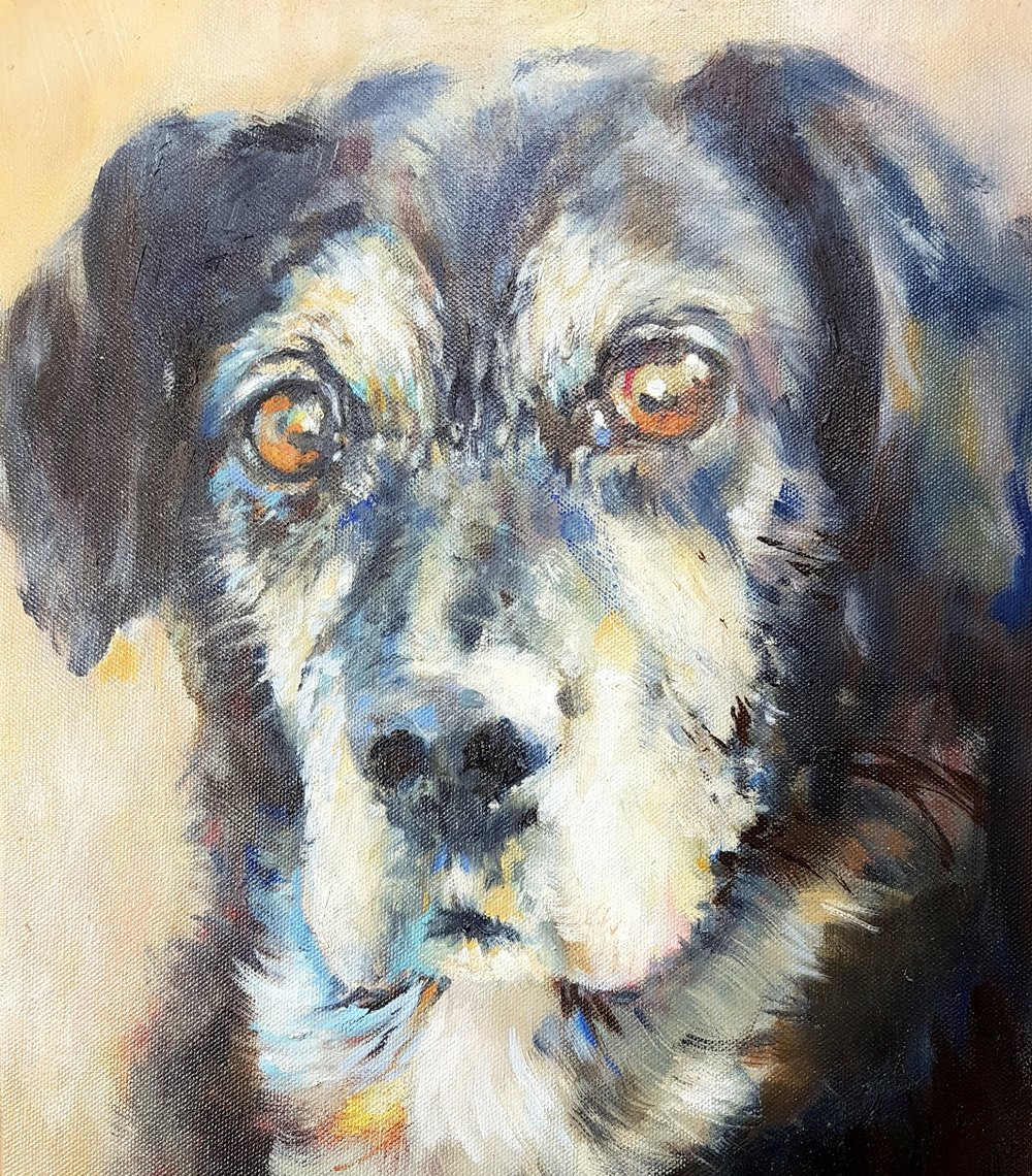kinsey lab x collie commissioned oil painting sue gardner (1).jpg