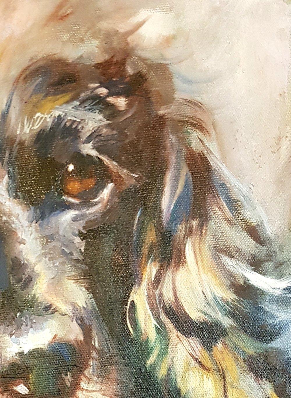 dog portrait oil painting spaniel by sue gardner.jpg