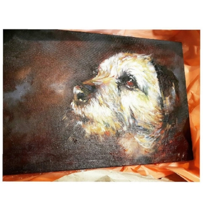 This is a portrait of Gilbert, a handsome Border Terrier. And a very good boy, by the look of him .