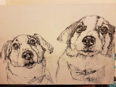 pen sketch jack russels by sue gardner.jpg