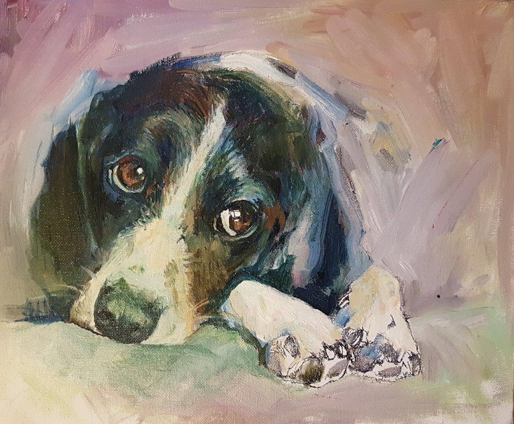 hound dog oil painting by sue gardner.jpg