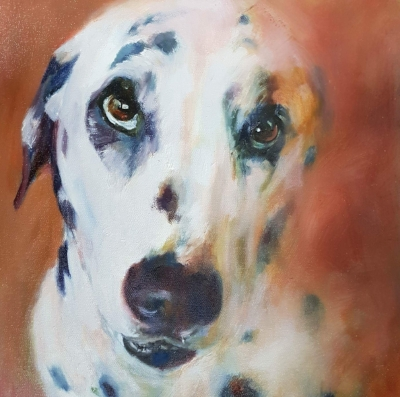 dalmatian pet dog portrait sue gardner.jpg